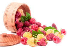 Red and yellow raspberries in wooden bowl isolated on white. Yellow and red raspberry with leaves spilled from a wooden bowl isolated on white background Royalty Free Stock Photography