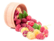 Red and yellow raspberries in wooden bowl isolated on white. Yellow and red raspberry with leaves spilled from a wooden bowl isolated on white background Stock Image