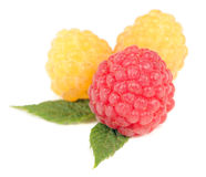 Red and Yellow Raspberry Isolated on White Background Stock Photography