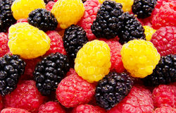 Red and yellow raspberry mulberry background Stock Image
