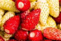 Red and yellow ripe strawberry Stock Photography