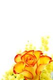 Red and yellow rose arrangement Royalty Free Stock Image