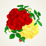 Red and yellow rose with buds and leaves vintage vector Royalty Free Stock Images