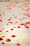Red and yellow rose petals on floor after wedding ceremony. Royalty Free Stock Photography