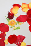 Red and yellow rose petals in water Royalty Free Stock Photos