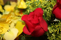 Red and yellow roses. Close up of red and yellow rose flowers Stock Photography