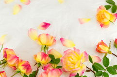 Red and yellow roses on white background Stock Photos