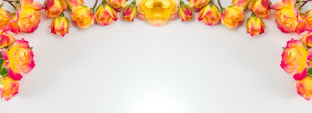 Red and yellow roses wide banner. Red and yellow roses wide silver banner Royalty Free Stock Photo