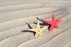Red and yellow Seastar on beach sand Stock Image
