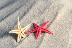Red and yellow Seastar on beach sand Stock Photos