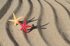 Red and yellow Seastar on beach sand Royalty Free Stock Image