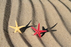 Red and yellow Seastar on beach sand Royalty Free Stock Photography