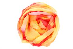 A red and yellow silk scarf associated rose Stock Images