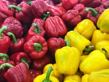 Red and Yellow sweet pepper background, Fresh ingredient for healthy food. royalty free stock photo
