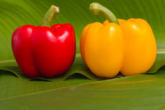 Red and yellow sweet peppers Royalty Free Stock Image