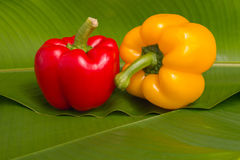 Red and yellow sweet peppers Stock Images