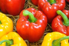 Red and yellow sweet peppers in farms. Stock Images