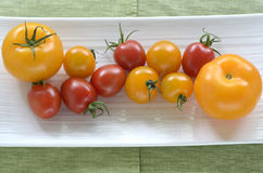 Red and yellow tomatoes Stock Photography
