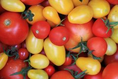 Red and yellow tomatoes. As very nice background Stock Photo