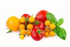 Red and Yellow Tomatoes with Basil Leaf Isolated on White Royalty Free Stock Photos