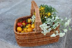 Red and yellow tomatoes in the basket covered with herbs Royalty Free Stock Images