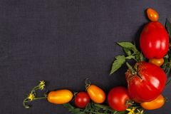 Red and yellow tomatoes. Different varieties of red and yellow tomatoes on black background, top view. Healthy fruit eating stock photography
