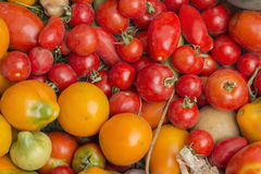 Red and yellow tomatoes. From the garden together Royalty Free Stock Photo