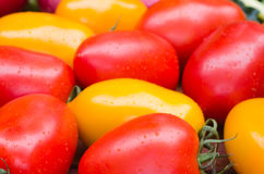 Red and yellow tomatoes. Group of red and yellow tomatoes Royalty Free Stock Image