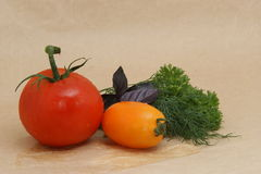 Red and yellow tomatoes and herbs Royalty Free Stock Photo