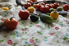 Red and yellow tomatoes set with green cucumbers on linen cloth. Royalty Free Stock Image