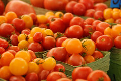 Red and yellow tomatos Royalty Free Stock Photography