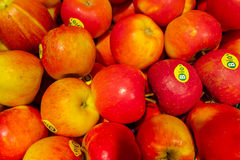 Red and yellow Topaz apples Royalty Free Stock Photos