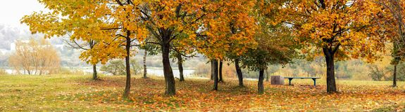Red and yellow trees in autumn by the river royalty free stock photography