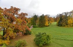 Red and yellow trees are on the green grass stock photography