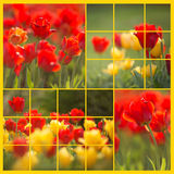 Red and Yellow Tulip collage - left side Royalty Free Stock Image