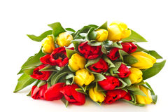 Red and yellow tulip flowers Stock Photo