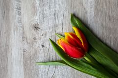 Red and yellow tulip on wooden background. Perfect invitation for mother`s day or international women`s day. Minimalist bright. Flower background for advert or stock images