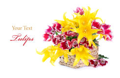 Red and yellow tulips in a basket royalty free stock images