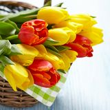 Red and yellow tulips in a basket Stock Photography
