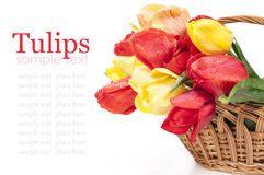 Red and yellow tulips in a basket Royalty Free Stock Image