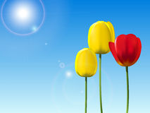 Red and yellow tulips on a blue sky background Stock Photography
