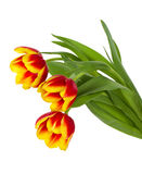 Red-yellow tulips bouquet Royalty Free Stock Photos