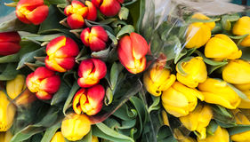 Red and yellow tulips bouquets at market. Stock Image