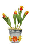 It is red yellow tulips in a bucket Stock Image