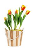 It is red-yellow tulips in a bucket Stock Photos