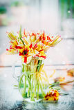 Red and yellow tulips bunch in glass vase at window with spring nature. Stock Image