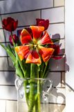 Red and yellow tulips in a glass vase stock photos