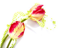 Red and yellow tulips and green beads. Royalty Free Stock Images