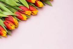 Red and yellow tulips lying in a row on pastel background with place for text. Spring concept. Flat lay, top view. Valentines day Stock Photography