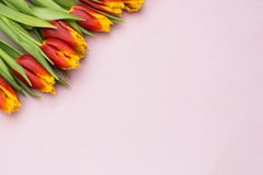 Red and yellow tulips lying in a row on pastel background with place for text. Spring concept. Flat lay, top view. Valentines day Stock Images